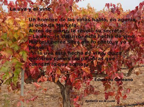 Foto Isabel Montero. Ombatillo, Corella